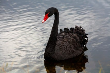 StrategyDriven Risk Management Article | Black Swan