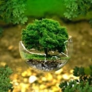 StrategyDriven Entrepreneurship Article |Eco-friendly|Eco-Friendly Business Ideas