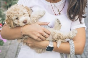 StrategyDriven Managing Your Business Article |Software Tools for Office Operations|Tools For Vets: 5 Software Tools For Veterinarian Office Operations